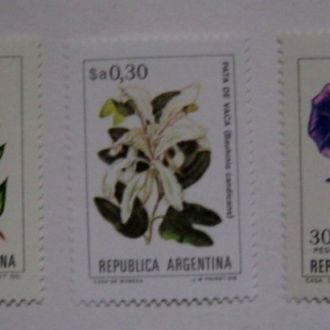 флора аргентина цветы А3
