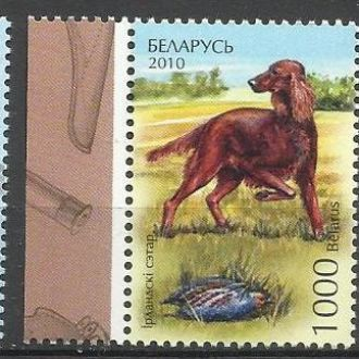 Беларусь 2010 фауна собаки 3м.**