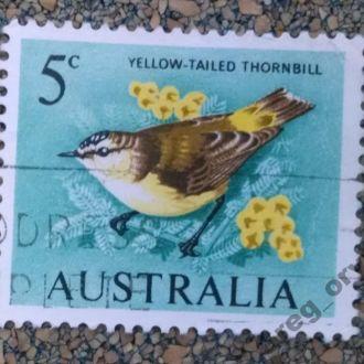 марки Австралия фауна птицы