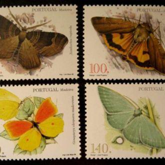 ! насекомые бабочки  португалия мадейра