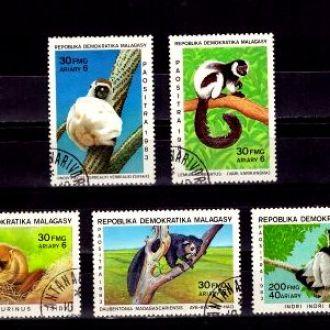 Фауна.Мадагаскар.Лемуры  5м Г20
