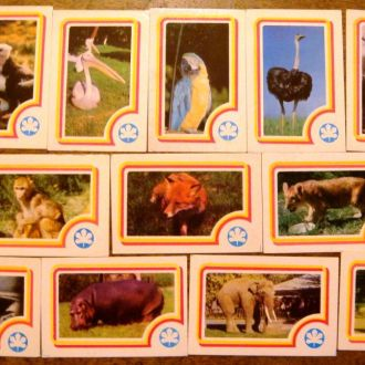 Набір календарів  Зоопарк