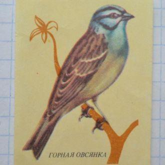 Спичечная этикетка Овсянка горная  Фауна Птицы
