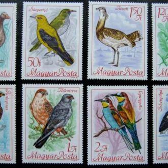 птицы фауна венгрия гусь орел   birds сова аист