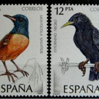 птицы пернатые птица birds