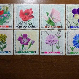 Польша флора цветы КЦ-2,8м