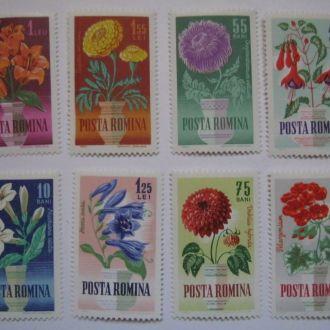 флора  растения цветы кактусы деревья румыния мо