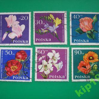Польша   1964 Цветы  *
