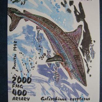 рыбы акула танзания  фауна ро ме