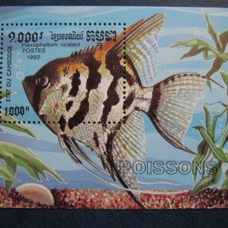 рыбы камбоджа  фауна ро