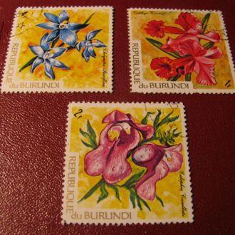 Флора Квіти Цветы Бурунді Бурунди