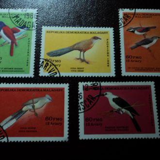 Фауна Мадагаскар Птахи Птицы