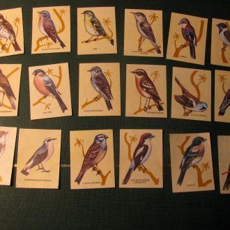 Фауна Птицы Птахи Спичечные этикетки для спичек