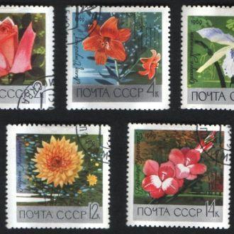 СССР (1969) Ботанический сад Академии наук. Цветы