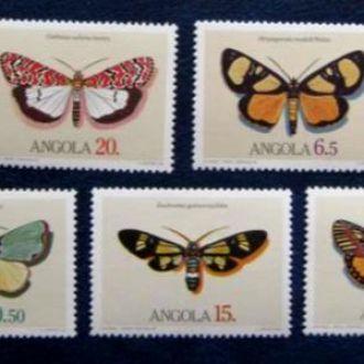 насекомые бабочки ангола