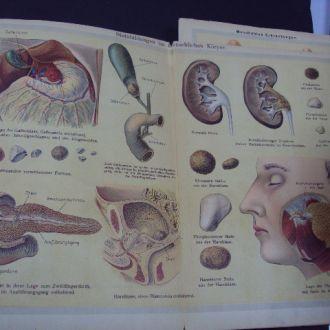 книга анатомия биология человека Германия