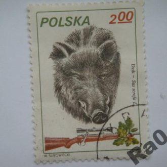 Марка почта Польша 1981 Охота Кабан Фауна