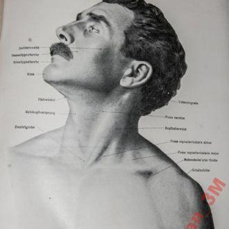 Атлас, анатомия 1920год
