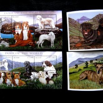 фауна  собаки замбия