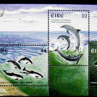 фауна дельфины ирландия киты касатки