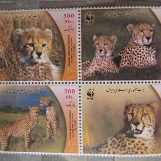 тигры львы леопарды гепарды коты WWF фауна кошки