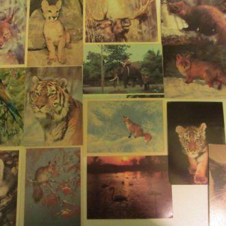 Комплект открыток Животные