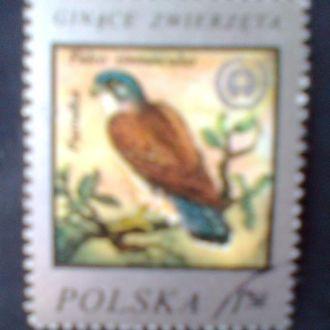 Польша г1977 Охрана природы.Пустельга