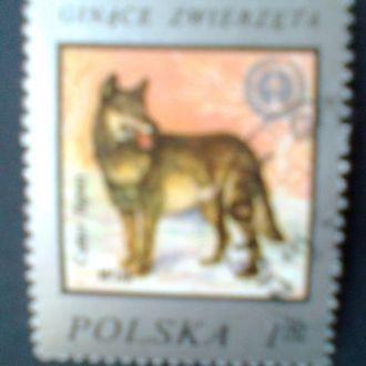 Польша г1977 Охрана природы Волк
