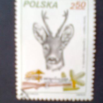 Польша г1981 Охота.Голова косули