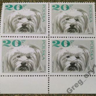 марки Польша кварт фауна собаки MNH