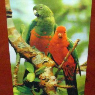 картина  голография - попугаи 345 * 245 мм  ! ! !