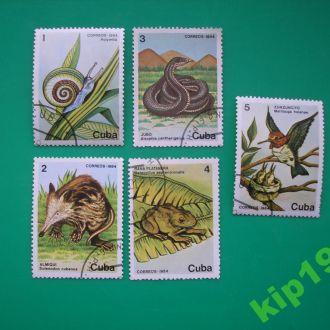 Куба Фауна
