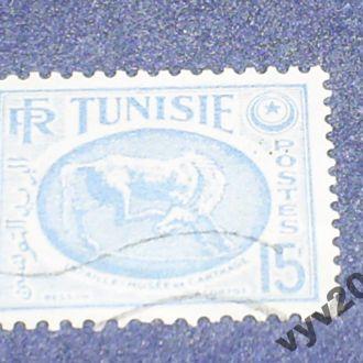 Тунис-1952 г.-Лошадь