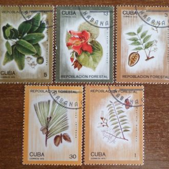 Куба флора цветы КЦ=1,2м