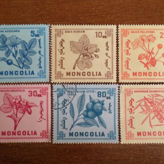 Монголия флора КЦ=1,6м цветы не полная