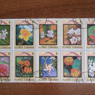 Куба флора цветы КЦ=2м
