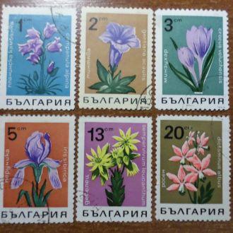 Болгария цветы флора КЦ=1,5м