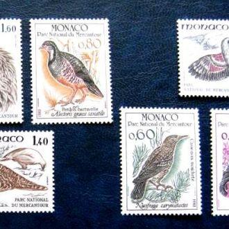 птицы фауна монако monaco  birds