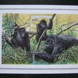 фауна руанда гориллы блок