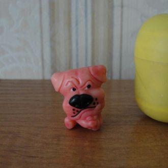 Ландрин,Lovely dogs, Цветные собачки,собаки