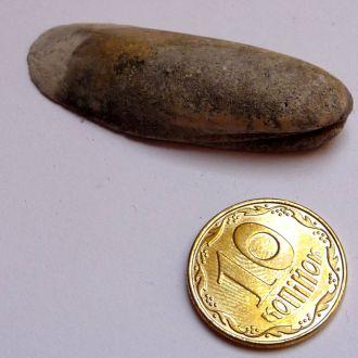 Скам'янілий бівалвія (Bivalvia)2
