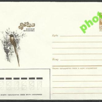 СССР 1985 ХМК* 85-338 фауна птицы мухоловка