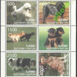 Грузия Батуми 1998 фауна собаки 6м.Клб**