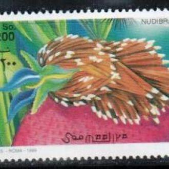 Сомали 1999 морские слизни фауна  MNH