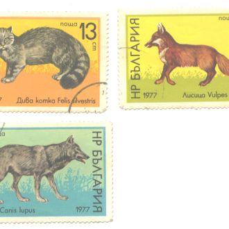 Болгария Фауна Кошки Волк Лисица 1977