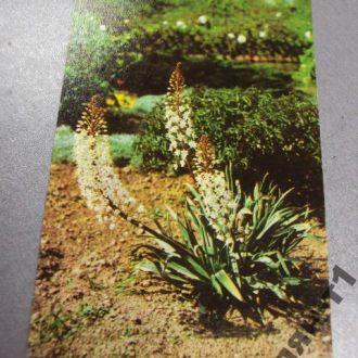 открытка киев ботанический сад