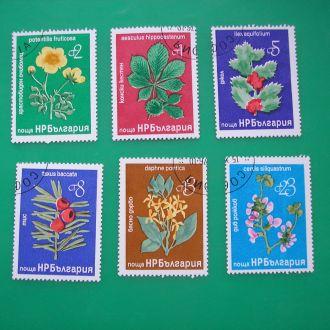 Болгария 1976   Цветы