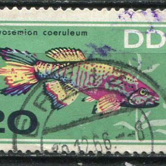 Германия ГДР  Фауна  Рыбы аквариума гаш