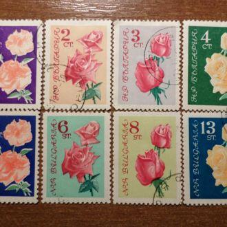Болгария флора КЦ=6,5м розы