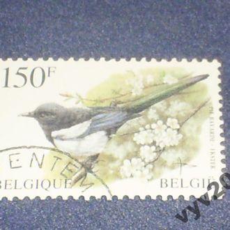 Бельгия-1997 г.-Сорока (полная) 7,5 евро